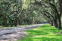 Stock photo: Beautiful oak trees lined path of worm sloe plantation in Savannah Georgia, USA.