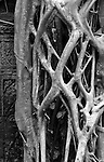 """Ta Prohm Roots And Stone 10 - Strangler fig and silk-cotton tree roots around the """"Tomb Raider"""" doorway, Ta Prohm Temple, Angkor, Cambodia"""