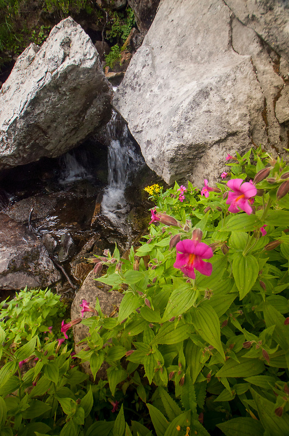 Mazama Lake Falls with Monkeyflowers and Rocks, Mt. Baker-Snoqualmie National Forest, Washington, US