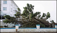 BNPS.co.uk (01202 558833)<br /> Pic: LeeMcLean/BNPS<br /> <br /> The felled tree yesterday.<br /> <br /> 'We can see clearly now, the tree has gone'<br /> <br /> Wind of change nets a million pound bonus to homeowners.<br /> <br /> Storm Eleanor caused a Sandbanks resident to open her curtains and  shout 'All my dreams have come true' yesterday as a huge conifer blocking her seaside view had become a victim of the high winds.<br /> <br /> Four luxury houses on Shore Road in the millionaire's enclave in Poole, Dorset, will now have an unobstructed view across the harbour and out to Brownsea Island.<br /> <br /> Adrian Dunford from Tailor Made estate agents said the force of nature will increase the value of each property by at least &pound;250,000 on the  exclusive peninsula where buyers pay a premium for the spectacular views.<br /> <br /> The 50ft conifer was brought down by the stormy weather on Tuesday night when the south coast was battered by winds of about 80mph.