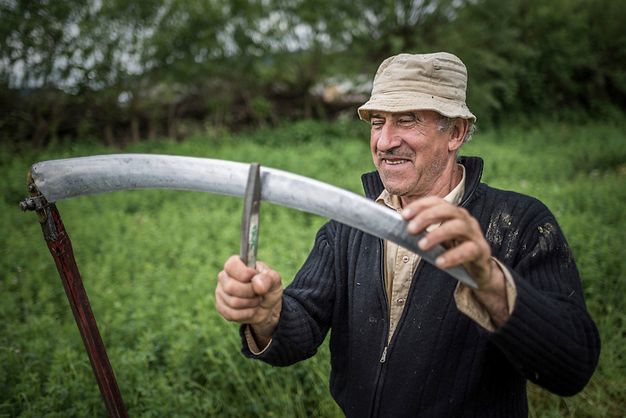 Man cutting grass with a sythe, Maramures, Romania