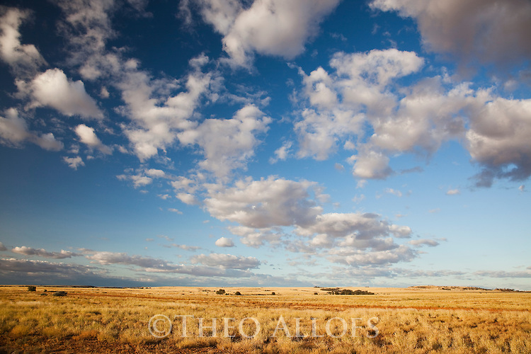 Australia, Queensland;  Grassland in Channel Country used for  cattle grazing