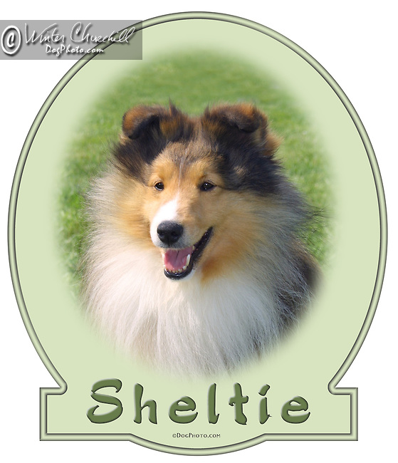 Sheltie This design is offered on gift merchandise ONLY.<br /> <br /> You'll find all the merchandise options listed IN THE CART so add a design to your shopping cart first. All merchandise item are shipped straight to you from our lab in Dallas, Tx.