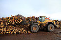 TO GO WITH STORY BY Arthur Beesley. DATE 8 FEB 2018. Logs are collected in the log yard at Balcas Timber Ltd,  Laragh, Ballinamallard, Enniskillen Co. Fermanagh, Northern Ireland. Photo/Paul McErlane