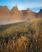 Badlands National Park, SD  <br /> Summer afternoon light on grasses and rabbit brush with badlands skyline near Cedar Pass