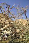 Israel, Judean Desert, Ein Gedi spring overlooking the Dead Sea