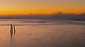 North America, USA, California, San Francisco. San Francisco skyline with fog