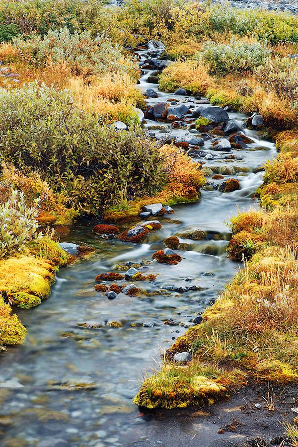 Small stream (Paradise River) flowing through alpine meadow, Mazama Ridge, Mount Rainier National Park, Washington, USA