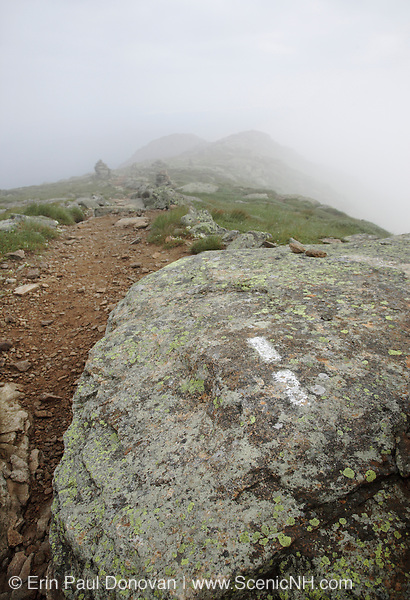 A white trail blaze painted on rock along the Appalachian Trail (Garfield Ridge Trail) during the summer months in the New Hampshire White Mountains.