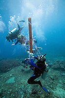 September 4th 2007- Nusa Penida, Bali, Indonesia- A dive leader deploys a DSMB at the end of a drift dive at a dive site known as Tayo Pakeh.  Photograph by Daniel J. Groshong/Tayo Photo Group