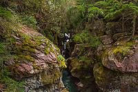 Avalanche Creek, Trail of the Cedars