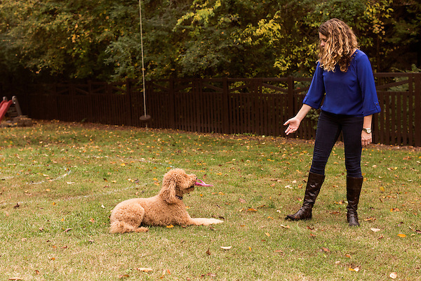 October 29, 2015. Charlotte, NC.<br />  Tonia Cox tries to get a stolen flip flop from her family dog, Murphy Jo.<br /> The Cox family dog, Murphy Jo, was almost killed after she ingested an estimated ten pieces of chewing gum containing the sugar substitute Xylitol. <br /> Given little chance for survival, Murphy Jo, a 3 year old Labradoodle, pulled through after 3 blood transfusions and over $5000 in vet bills.<br /> <br /> Jeremy M. Lange for the Wall Street Journal