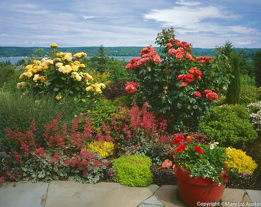 Vashon Island, WA: Summer perennial garden of roses, heuchera, barberry, sedges and boxwood overlooking Quartermaster Harbor
