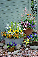 Spring Containers with Bulbs