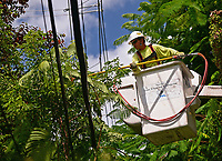 Clearing vegetation before 2019 Hurricane Dorian in Coral Gables, Fla. on August 31, 2019.