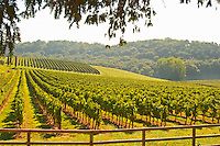 The vineyard and a valley with a forest - Chateau Carignan, Premieres Cotes de Bordeaux