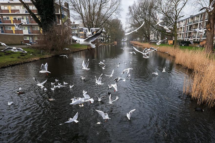 Nederland, Amsterdam, 13 feb 2015<br /> Meeuwen en andere vogels hebben net oud brood gekregen.<br /> Foto: (c) Michiel Wijnbergh