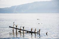 White Heron, Lake Toba (Danau Toba), North Sumatra, Indonesia