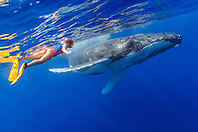 woman snorkeler and humpback whale, Megaptera novaeangliae, Hawaii, Pacific Ocean