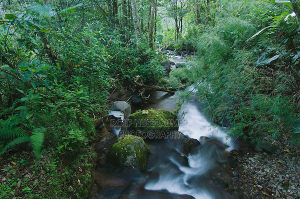 Mountain stream in Cloudforest in Highlands, Bosque de Paz, Central Valley, Costa Rica, Central America, December 2006