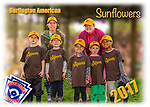2017 Burlington American Sunflowers