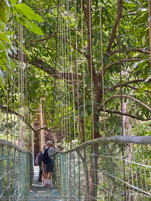 Canopy bridge walk in the Carara Park Dry forest transition zone, Costa Rica, Central America