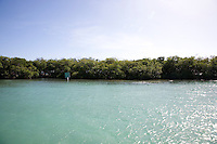 People swimming at the mangrove cayo Mata la Gata, a small island in the middle of the ocean that was formed by red mangrove roots in Lajas, Puerto Rico on 2nd January 2012.