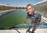 Khaled Abu Khater places a hose in his water storage tank in Al Fukari, Gaza. He grows vegetables in several greenhouses, and uses a catchment system to capture the rainwater that falls on the greenhouses. That water he mixes with increasingly saline groundwater from a well. The system allows him to produce a greater quantity of more lucrative crops, at a greater profit because he isn't forced to buy as much water for irrigation. Khater and several other farmers in the community received assistance in building the systems from Diakonie Katastrophenhilfe, a member of the ACT Alliance. In the wake of the devastating 2014 war, ACT Alliance members are supporting health care, vocational training, rehabilitation of housing and water systems, psycho-social care, and other humanitarian actions throughout the besieged Palestinian territory. Quality water is growing increasingly scarce in Gaza, as Israel drains the aquifer for its own development, pulling salt water into the aquifer from the west.