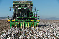 TURKEY, Kesik, near Menemen, company Genel Pamuk, harvest of conventional cotton with John Deere cotton picker 7760 which process the cotton in round module / TUERKEI, Kesik, bei Menemen, konventioneller Baumwollanbau, Firma Genel Pamuk, nach Verspruehen eines Entlaubungsmittel wird die Baumwolle maschinell mit einer John Deere Pflueckmaschine geerntet und in Rundballen verpackt
