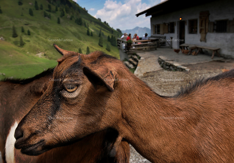 Life on Steinbach, an Austrian alm where they have cows, goats, chickens and pigs and serve meals to local tourists who are hiking in the area.  There is a revival of living and working on alms in the Tirol.  It is valued as a simple, good life.  Many people work in the ski industry in the winter and care for the alm and make cheese in the summer.