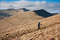 Female hiker hiking small path towards Fan Y Big with Pen Y Fan in distance, Brecon Beacons national park, Wales