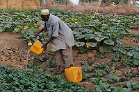 NIGER Zinder, Dorf Baban Tapki, Bewaesserung eines Gemuesegartens aus einem angelegten Wasser Reservoir / NIGER Zinder, village Baban Tapki, irrigation of vegetable garden from water pond , MORE PICTURES ON THIS SUBJECT AVAILABLE!!
