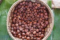 Myanmar, (Burma), Shan State, areca nut (betel nut) | Myanmar (Birma), Shan Staat, Betelnuesse oder Arekanuesse, Fruechte der Betelnusspalme (Areca catechu)