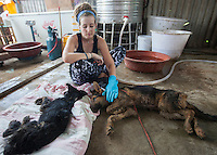 Scottish vegan activist Jess Henderson pets dogs ready to be saved by the Animal Hope and Wellness Foundation at a dog slaughterhouse in Yulin during the Yulin Dog Meat Festival, Yulin, Guangxi Province, China, 21 June 2016.<br /> <br /> Photo by STR / Sinopix