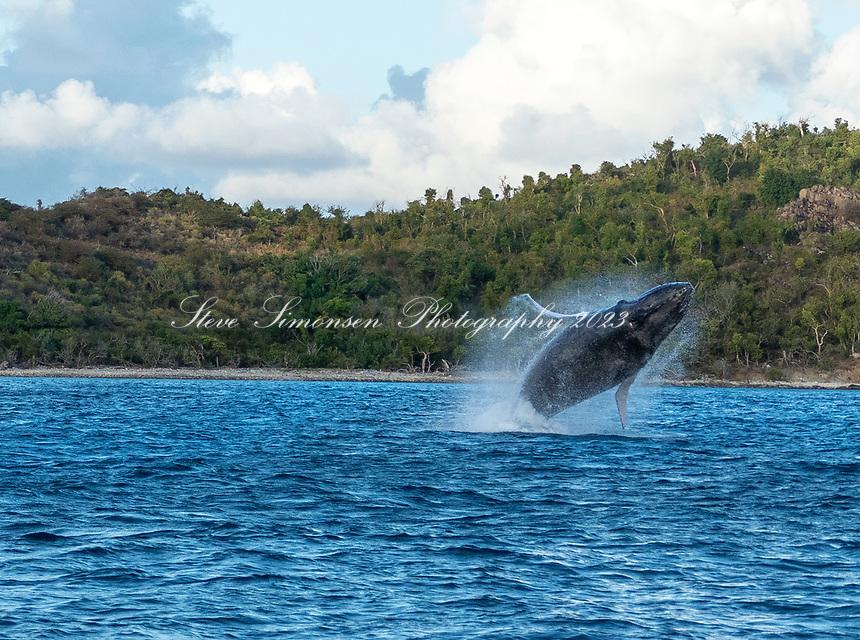 Breeching Humpback Whale<br /> Pillsbury Sound<br /> US Virgin Islands