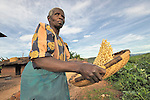 A woman winnows the chaff from her corn in Matuli, a village in northern Malawi.