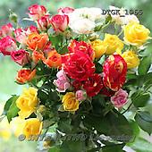 Gisela, FLOWERS, BLUMEN, FLORES, photos+++++,DTGK1965,#f#