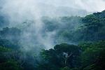 Mist rising from tropical rainforest after rain, Lope National Park, Gabon
