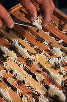 Detail of an opening to a hive. We can see the frames of the hive.