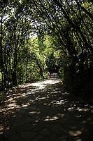 Narrow road through the Laura forest, Parque nacional de Garajonay, La Gomera, Canary Islands, Spain