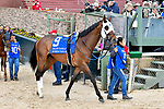 HOT SPRINGS, AR - APRIL 14: Oaklawn Handicap. Oaklawn Park on April 14, 2018 in Hot Springs,Arkansas. #9 Blueridge Traveler (Photo by Ted McClenning/Eclipse Sportswire/Getty Images)