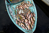 BELIZE. Belize City, fish for sale at the Southside fishmarket
