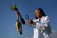 Modificazione genetica su barbabietole da zucchero. Genetic modification on sugar beet ...