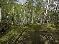 FOREST_LOCATION_90023