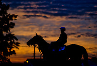 LOUISVILLE, KENTUCKY - APRIL 30: A horses walks to the track as the sun rises in the distance during Kentucky Derby and Oaks preparations at Churchill Downs on April 30, 2017 in Louisville, Kentucky. (Photo by Scott Serio/Eclipse Sportswire/Getty Images)