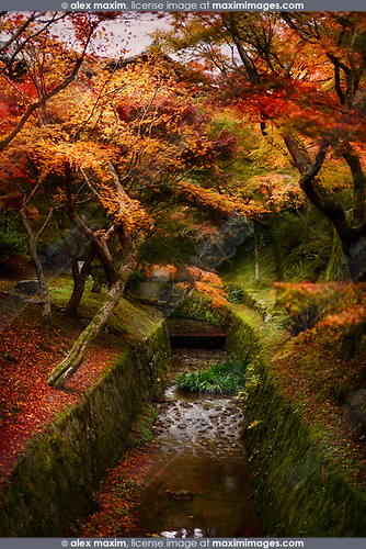 Beautiful autumn scenery of a Japanese garden with red and yellow maple trees growing along a water stream on Tofukuji temple grounds. Tofuku-ji, Kyoto, Japan 2017. Image © MaximImages, License at https://www.maximimages.com