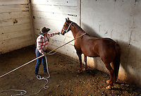 Kitty Lauman trains mustangs--as she says working with the horses, not against them.  They have a ranch in Prineville, OR.<br />