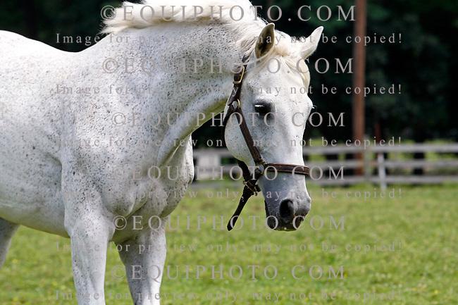 Highlander.    Photo By Bill Denver/EQUI-PHOTO