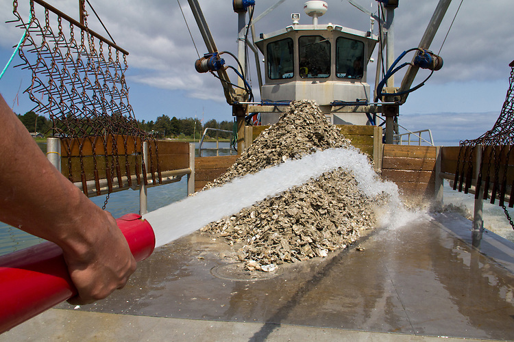 Washington Coast, Ocean Park, Nahcotta, Coast Seafoods, oyster scow, Nahcotta Express, commercial oyster farming, Willapa Bay, Pacific County, Southwest Washington, Washington State, Pacific Northwest, USA,