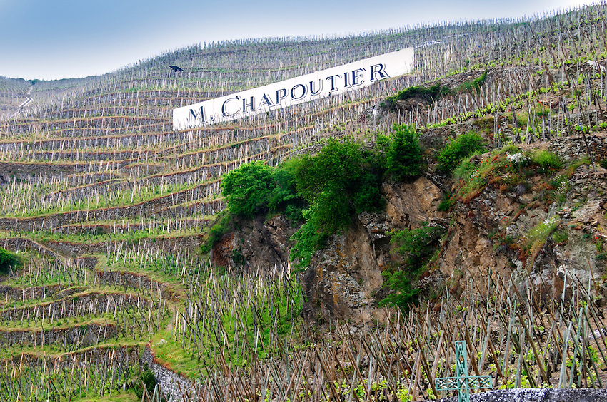 Terraced vineyards in the Cote Rotie district around Ampuis in northern Rhone planted with the Syrah grape. A sign saying M Chapoutier, one of the biggest producers.  Ampuis, Cote Rotie, Rhone, France, Europe